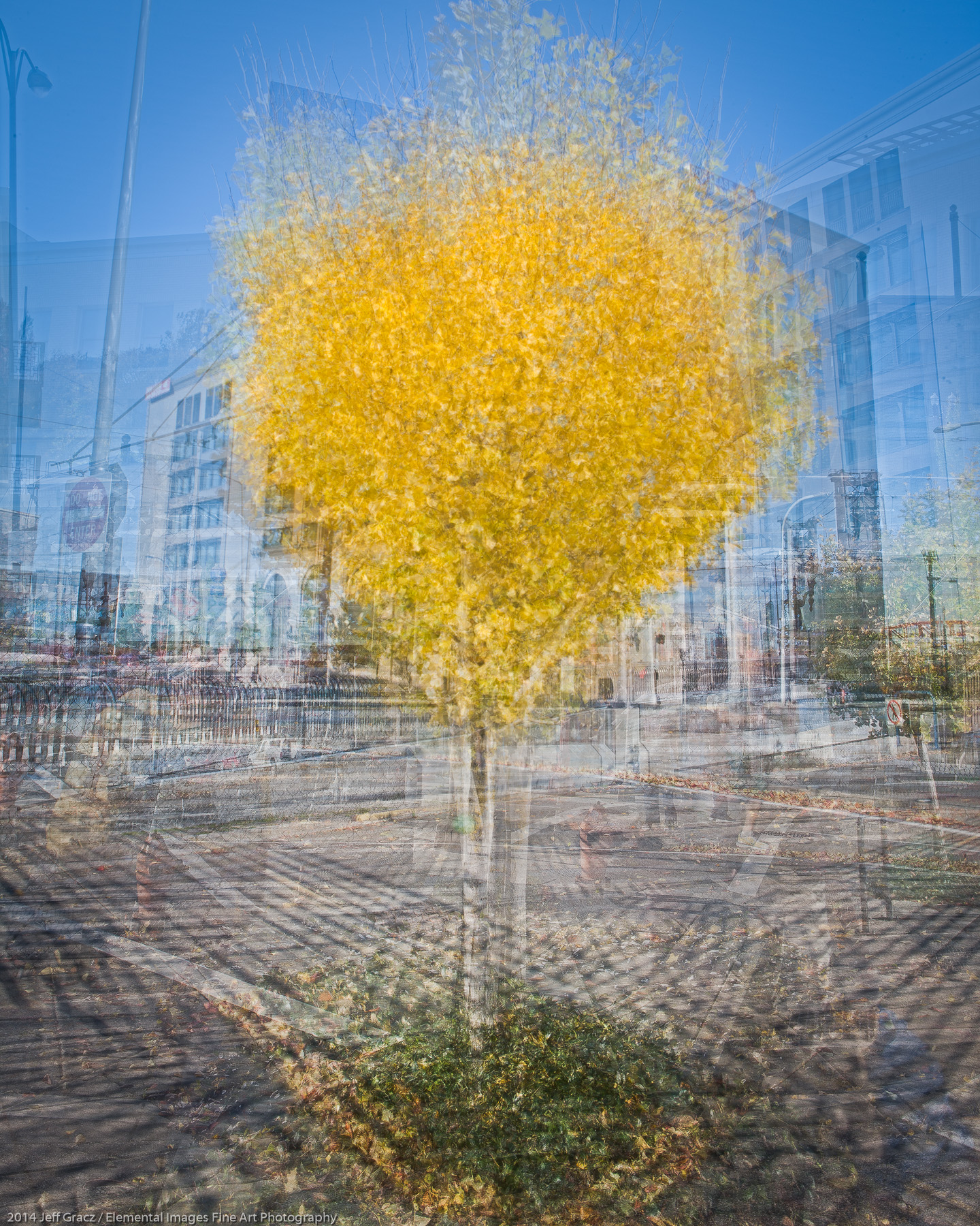 Arborhoods Series: Street Gingko | Portland | OR | USA - © 2014 Jeff Gracz / Elemental Images Fine Art Photography - All Rights Reserved Worldwide