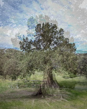 Arborhoods