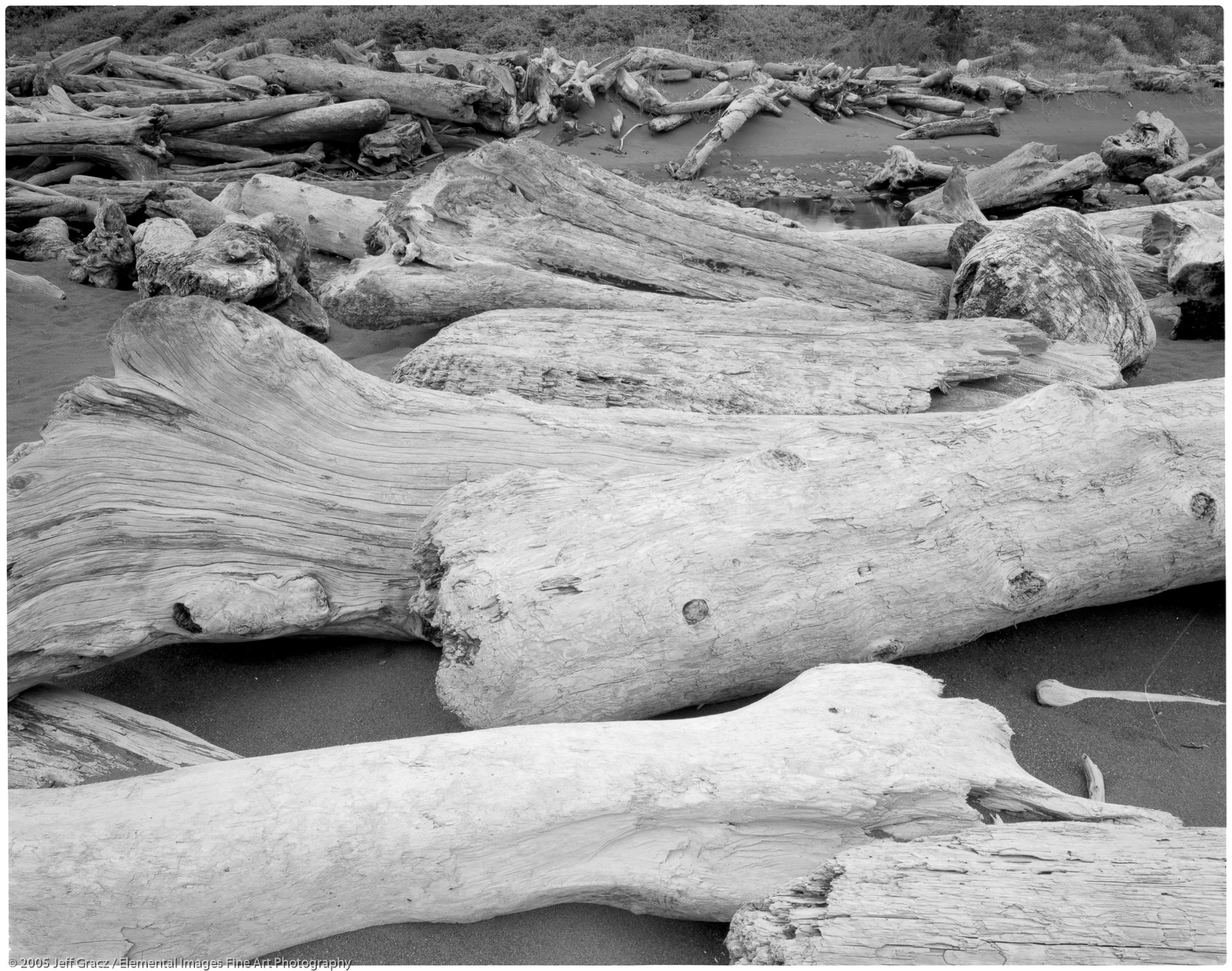 driftwood #10 - giant's bones series |  | CA | usa - © © 2005 Jeff Gracz / Elemental Images Fine Art Photography - All Rights Reserved Worldwide