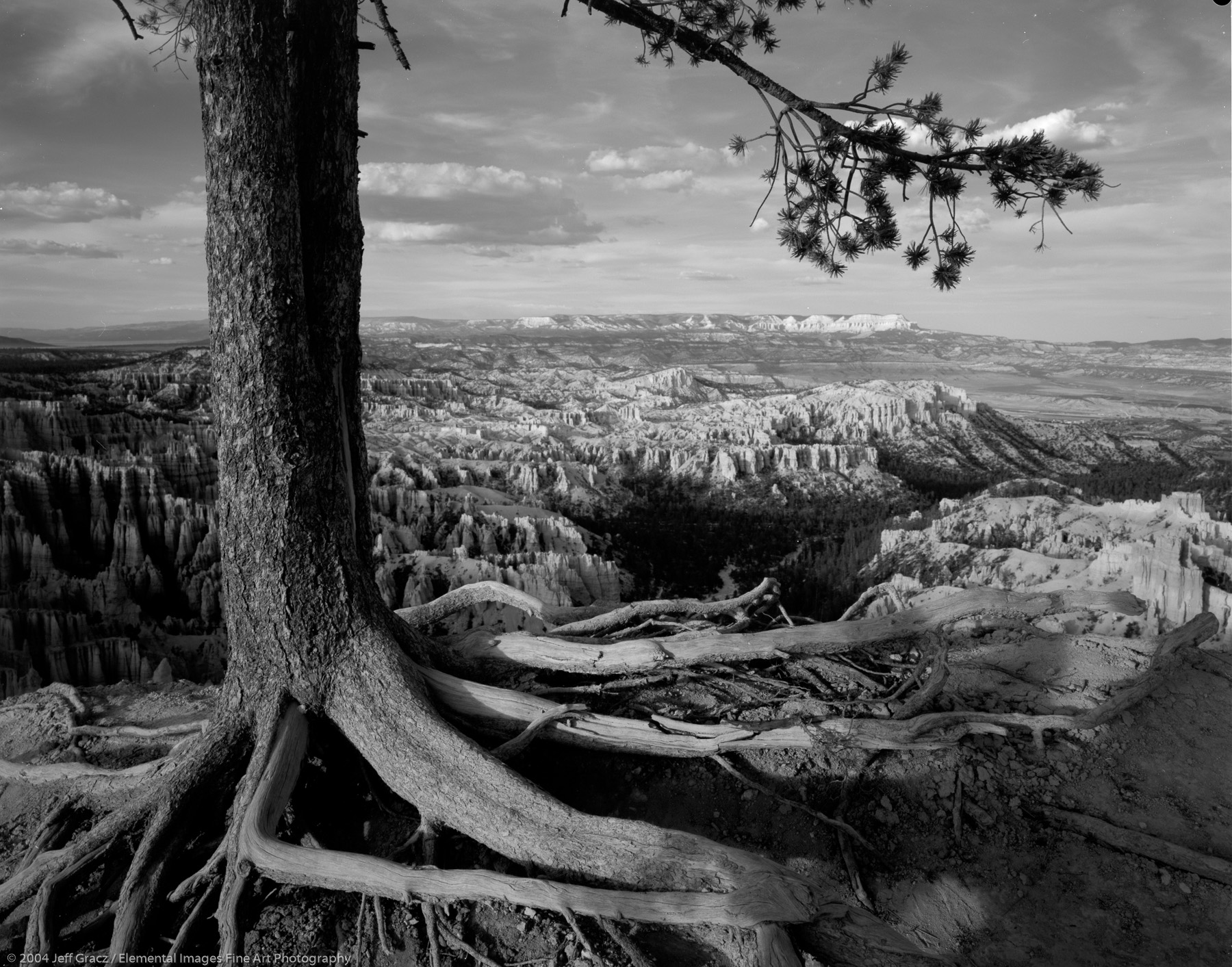 view from bryce canyon rim |  | UT | usa - © © 2004 Jeff Gracz / Elemental Images Fine Art Photography - All Rights Reserved Worldwide