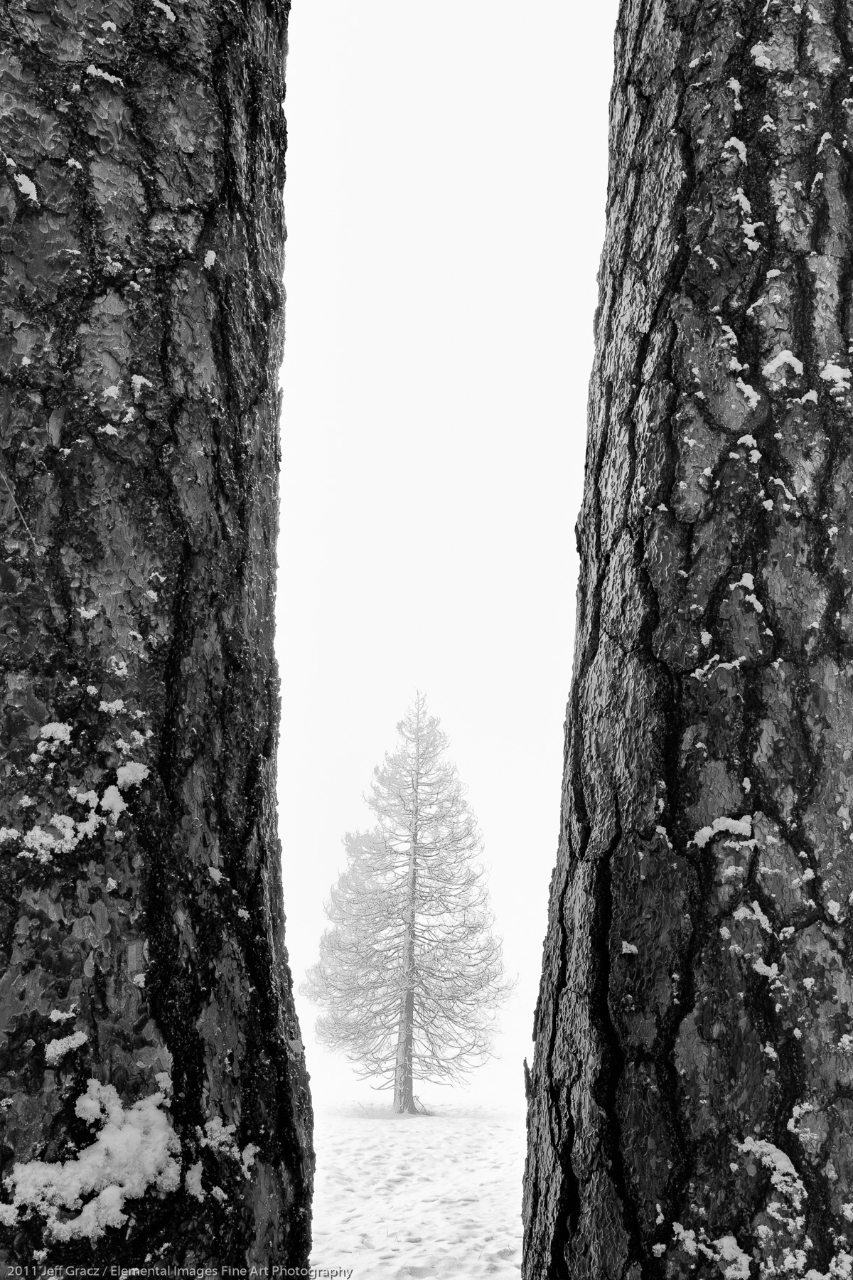 Three trees | Yosemite National Park | CA | USA - © 2011 Jeff Gracz / Elemental Images Fine Art Photography - All Rights Reserved Worldwide