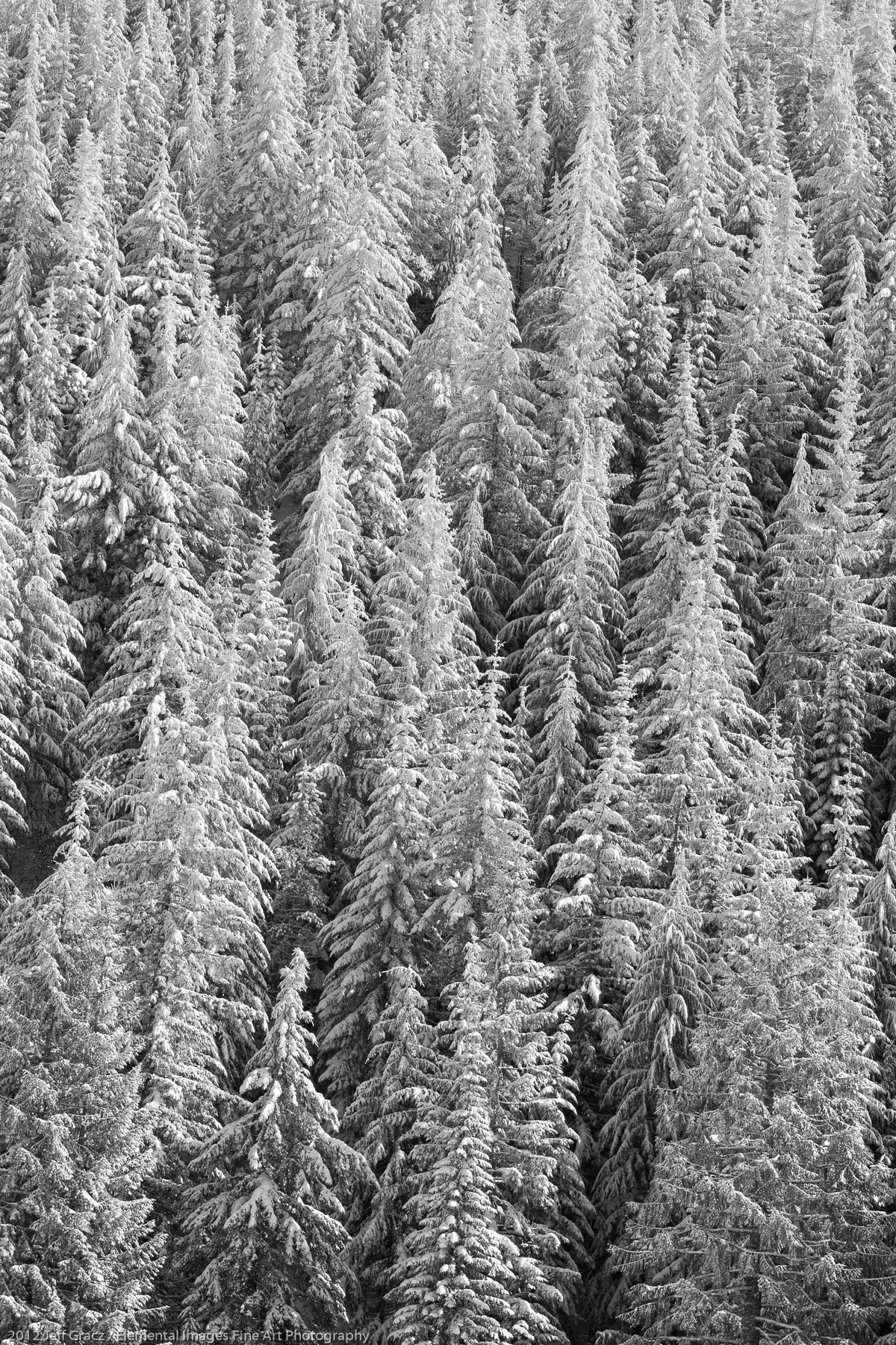 Coniferous Forest in Winter | Mt Hood National Forest | OR | USA - © 2012 Jeff Gracz / Elemental Images Fine Art Photography - All Rights Reserved Worldwide