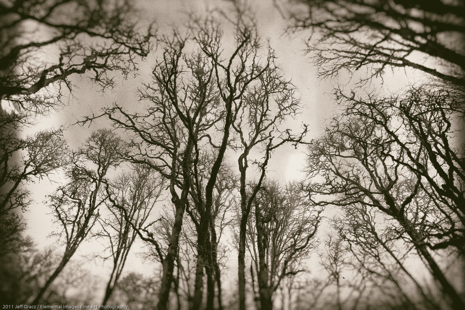 Branches XVI |  | OR | USA - © 2011 Jeff Gracz / Elemental Images Fine Art Photography - All Rights Reserved Worldwide