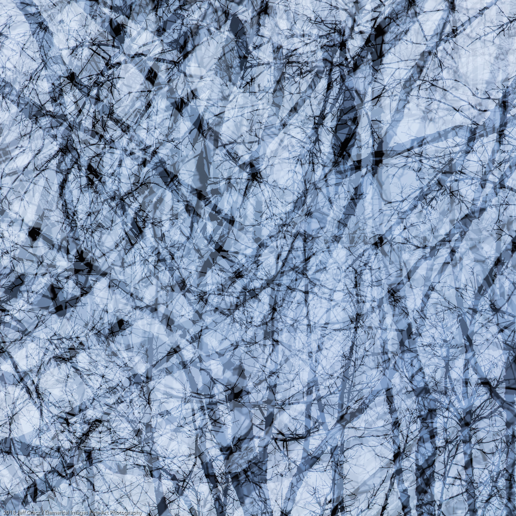 Branches #37   Portland   OR   USA - © 2018 Jeff Gracz / Elemental Images Fine Art Photography - All Rights Reserved Worldwide