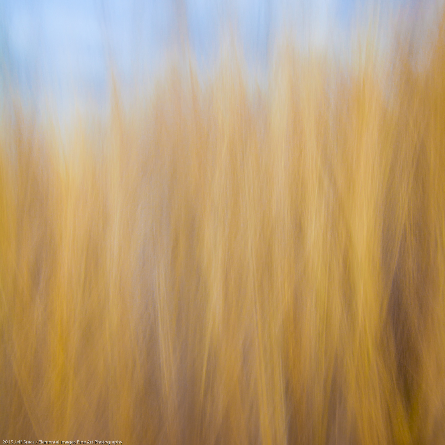 Grasses CXXXVI | Long Beach | WA | USA - © 2015 Jeff Gracz / Elemental Images Fine Art Photography - All Rights Reserved Worldwide