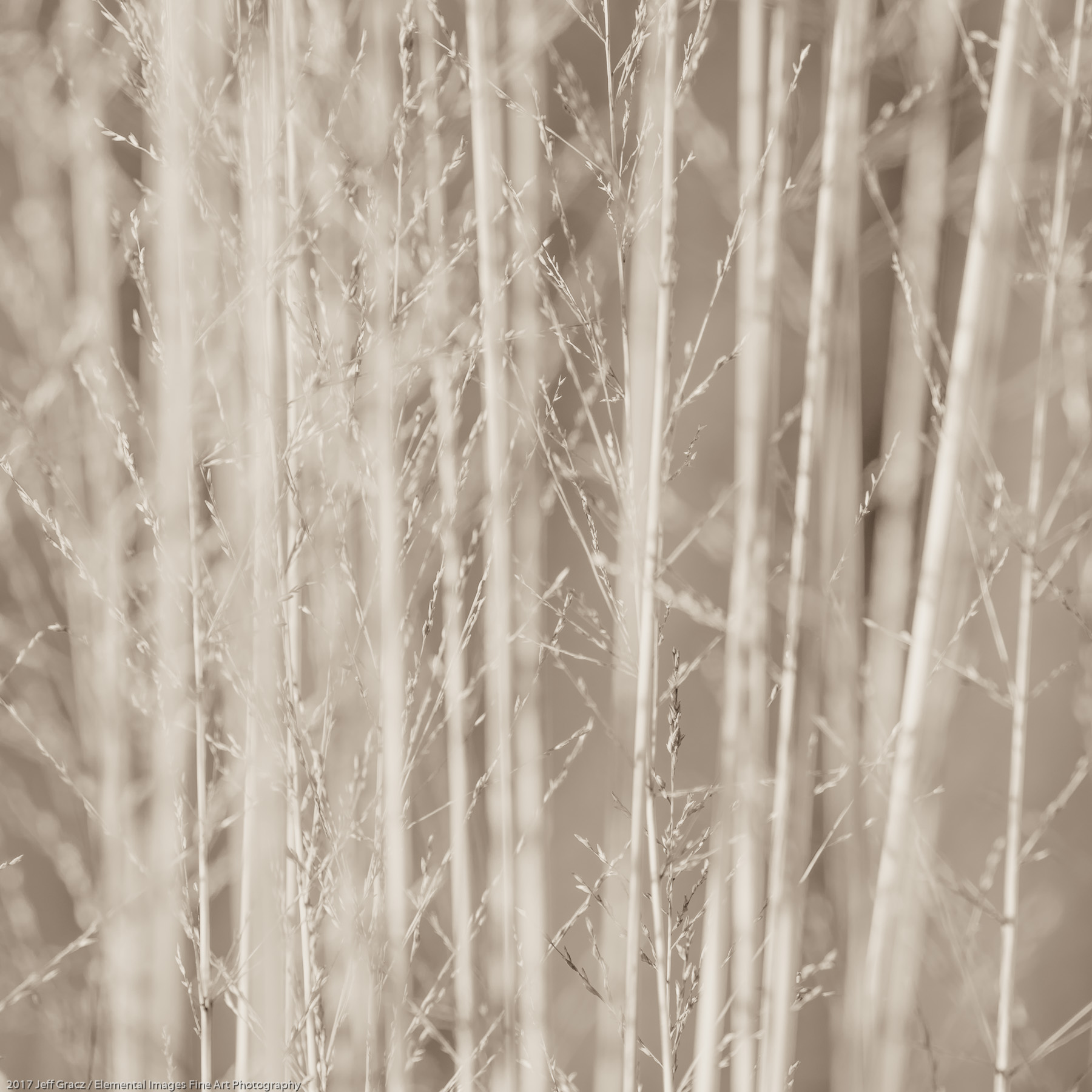 Grasses #152 | Silverton | OR | USA - © 2017 Jeff Gracz / Elemental Images Fine Art Photography - All Rights Reserved Worldwide