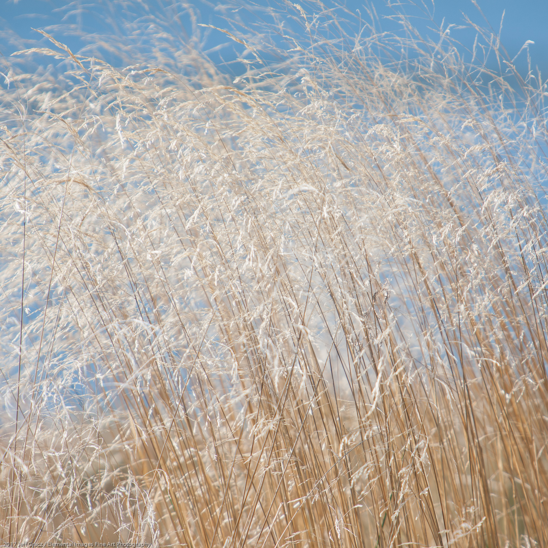 Grasses #162 | Three Rocks | OR | USA - © 2017 Jeff Gracz / Elemental Images Fine Art Photography - All Rights Reserved Worldwide