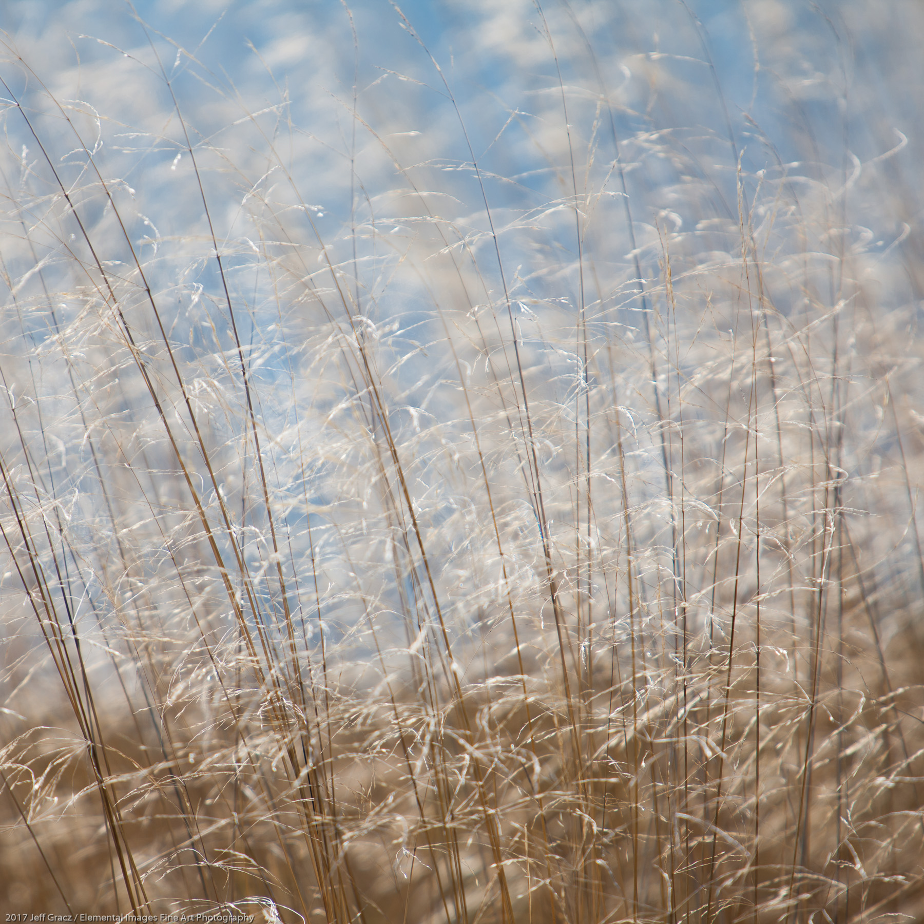 Grasses #163   Three Rocks   OR   USA - © 2017 Jeff Gracz / Elemental Images Fine Art Photography - All Rights Reserved Worldwide
