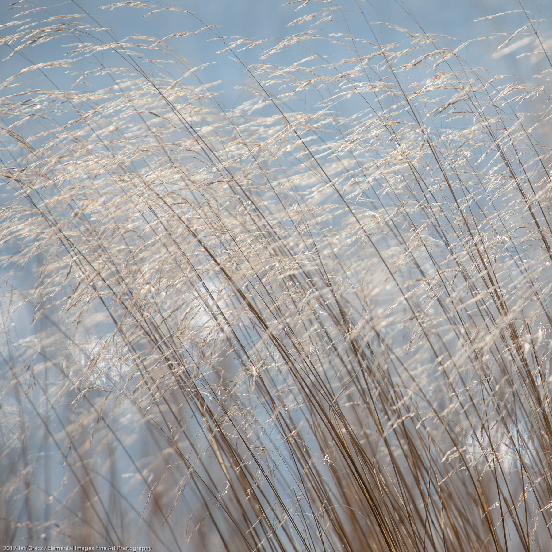 Grasses #165 | Three Rocks | OR | USA - © 2017 Jeff Gracz / Elemental Images Fine Art Photography - All Rights Reserved Worldwide