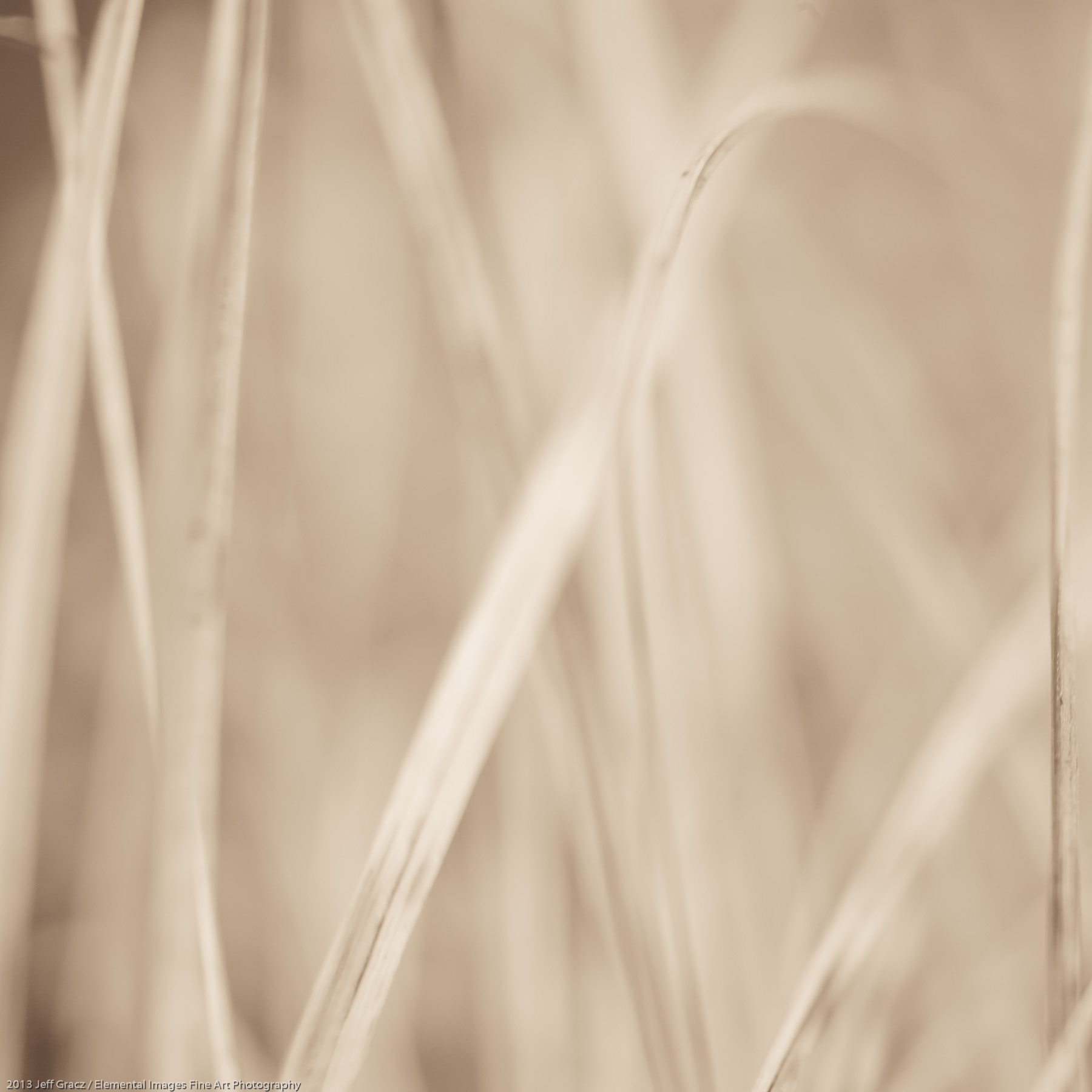 Grasses XXXIV | Portland | OR | USA - © 2013 Jeff Gracz / Elemental Images Fine Art Photography - All Rights Reserved Worldwide