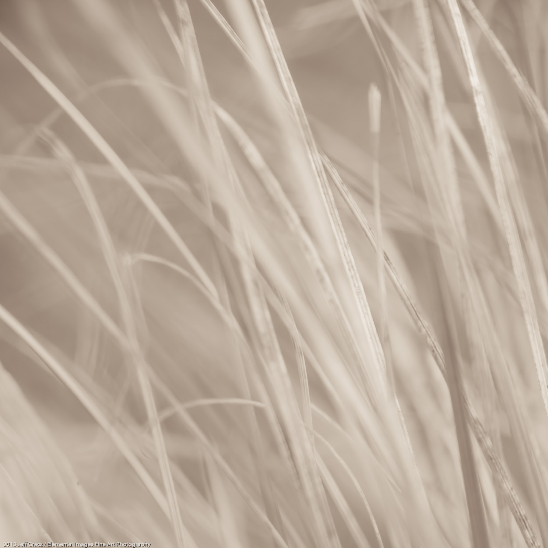 Grasses XXXV | Portland | OR | USA - © 2013 Jeff Gracz / Elemental Images Fine Art Photography - All Rights Reserved Worldwide