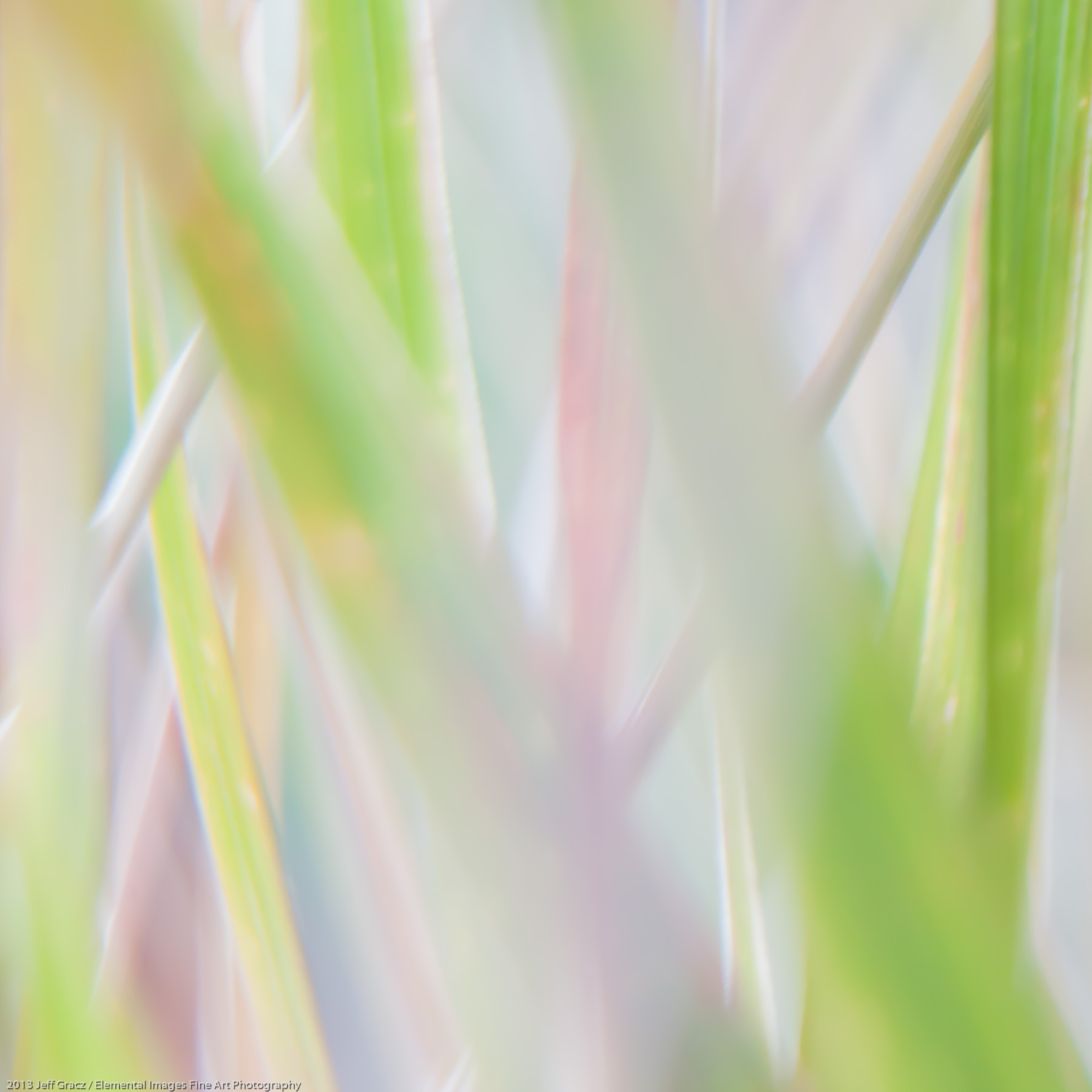 Grasses XLV | Portland | OR | USA - © 2013 Jeff Gracz / Elemental Images Fine Art Photography - All Rights Reserved Worldwide