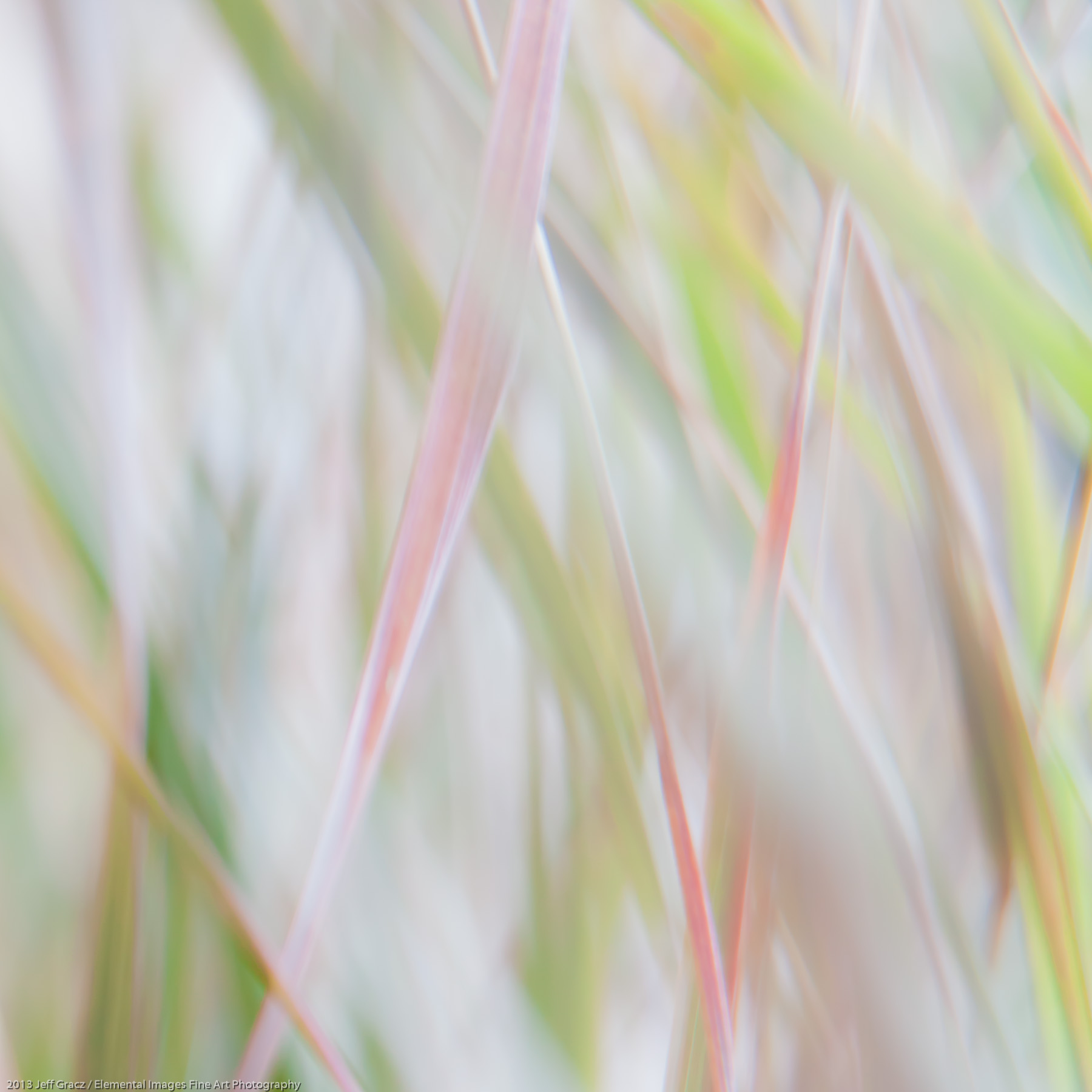 Grasses XLVIII | Portland | OR | USA - © 2013 Jeff Gracz / Elemental Images Fine Art Photography - All Rights Reserved Worldwide