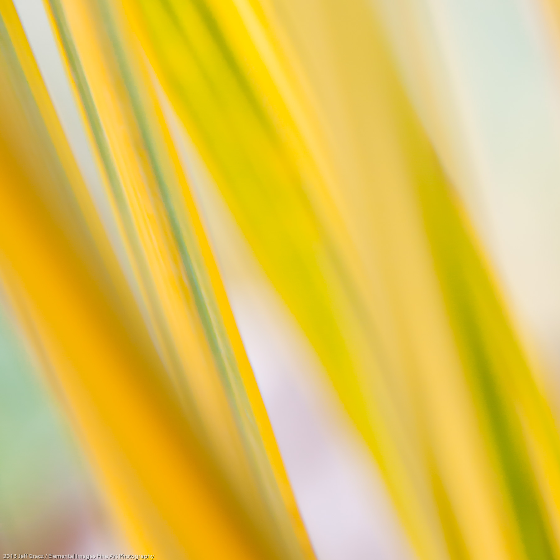 Grasses L | Portland | OR | USA - © 2013 Jeff Gracz / Elemental Images Fine Art Photography - All Rights Reserved Worldwide