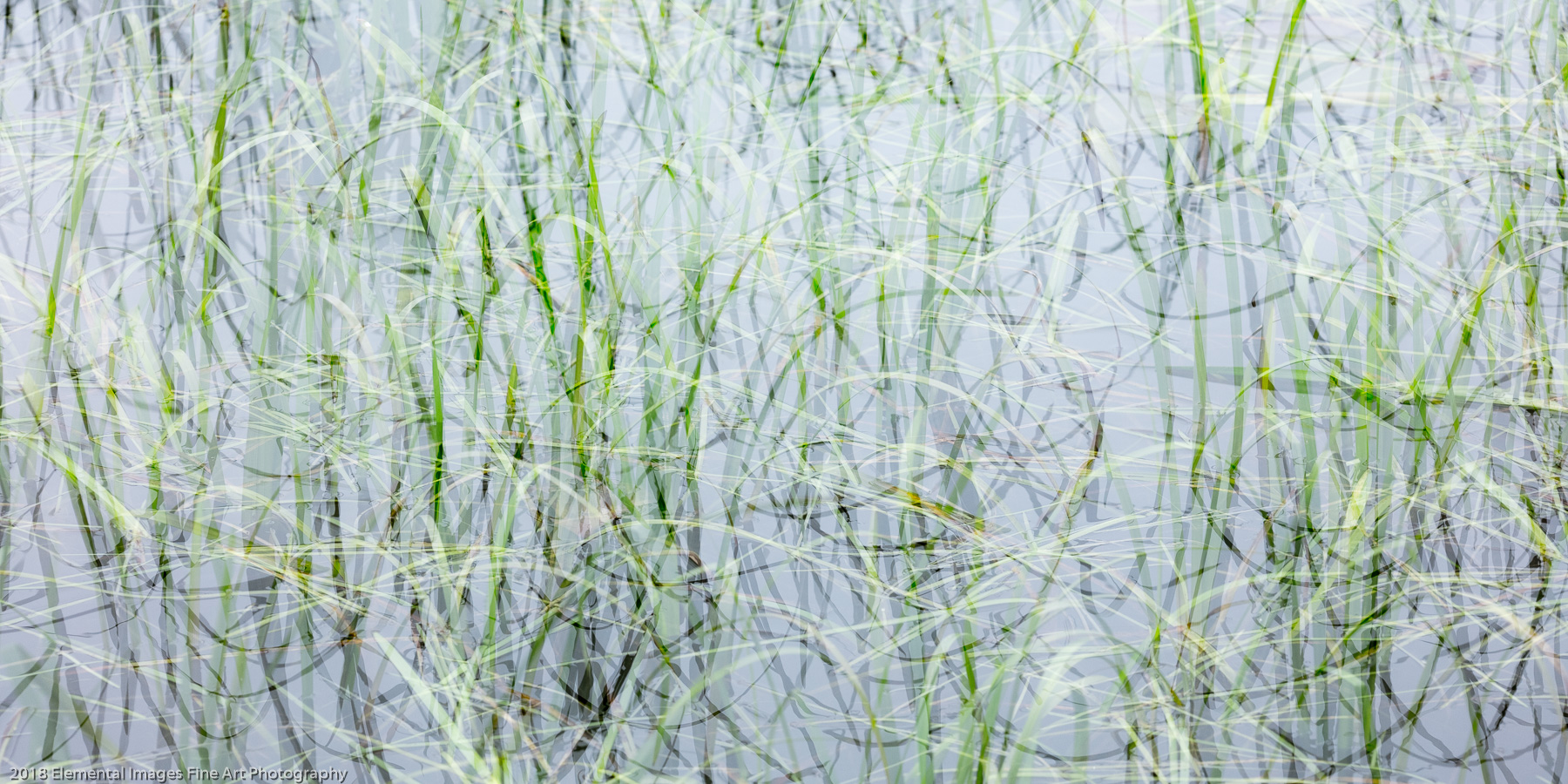 Grasses #166 | Cape Meares | OR | USA - © 2018 Elemental Images Fine Art Photography - All Rights Reserved Worldwide