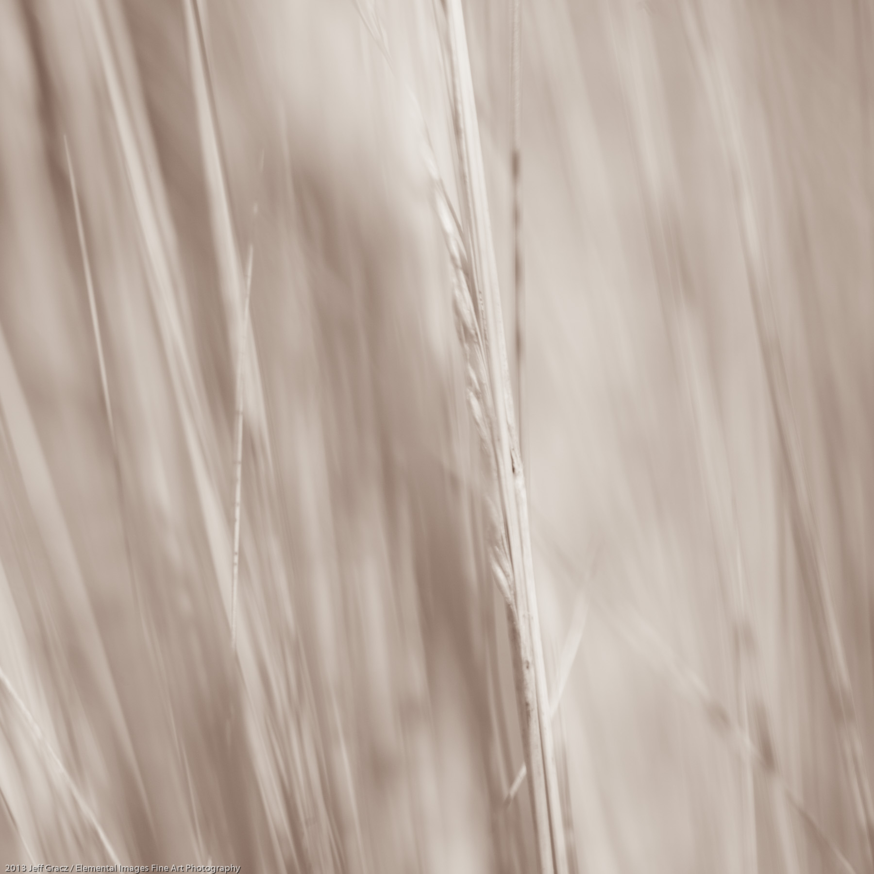 Grasses LIX | Portland | OR | USA - © 2013 Jeff Gracz / Elemental Images Fine Art Photography - All Rights Reserved Worldwide