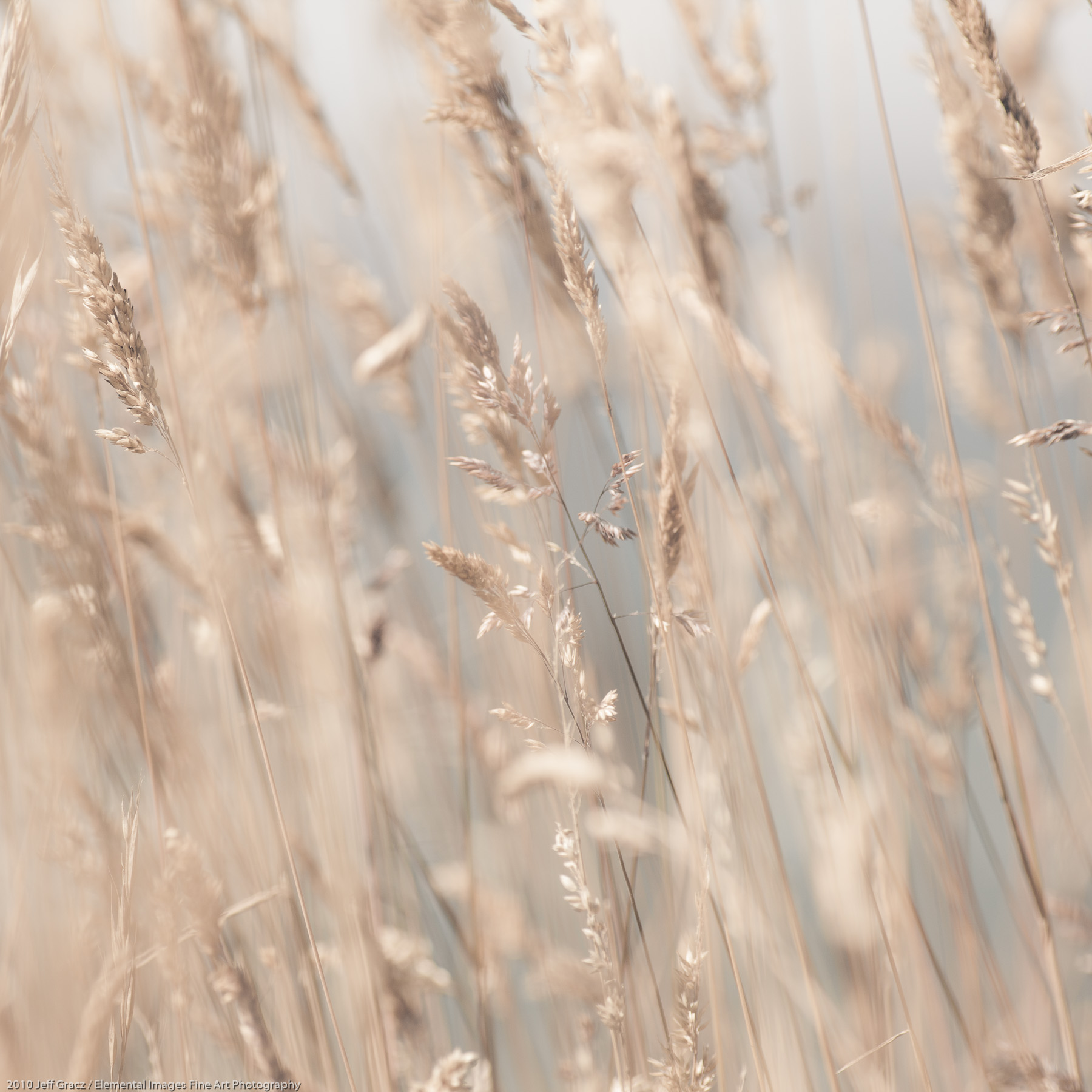 Grasses XCVIII |  |  |  - © 2010 Jeff Gracz / Elemental Images Fine Art Photography - All Rights Reserved Worldwide