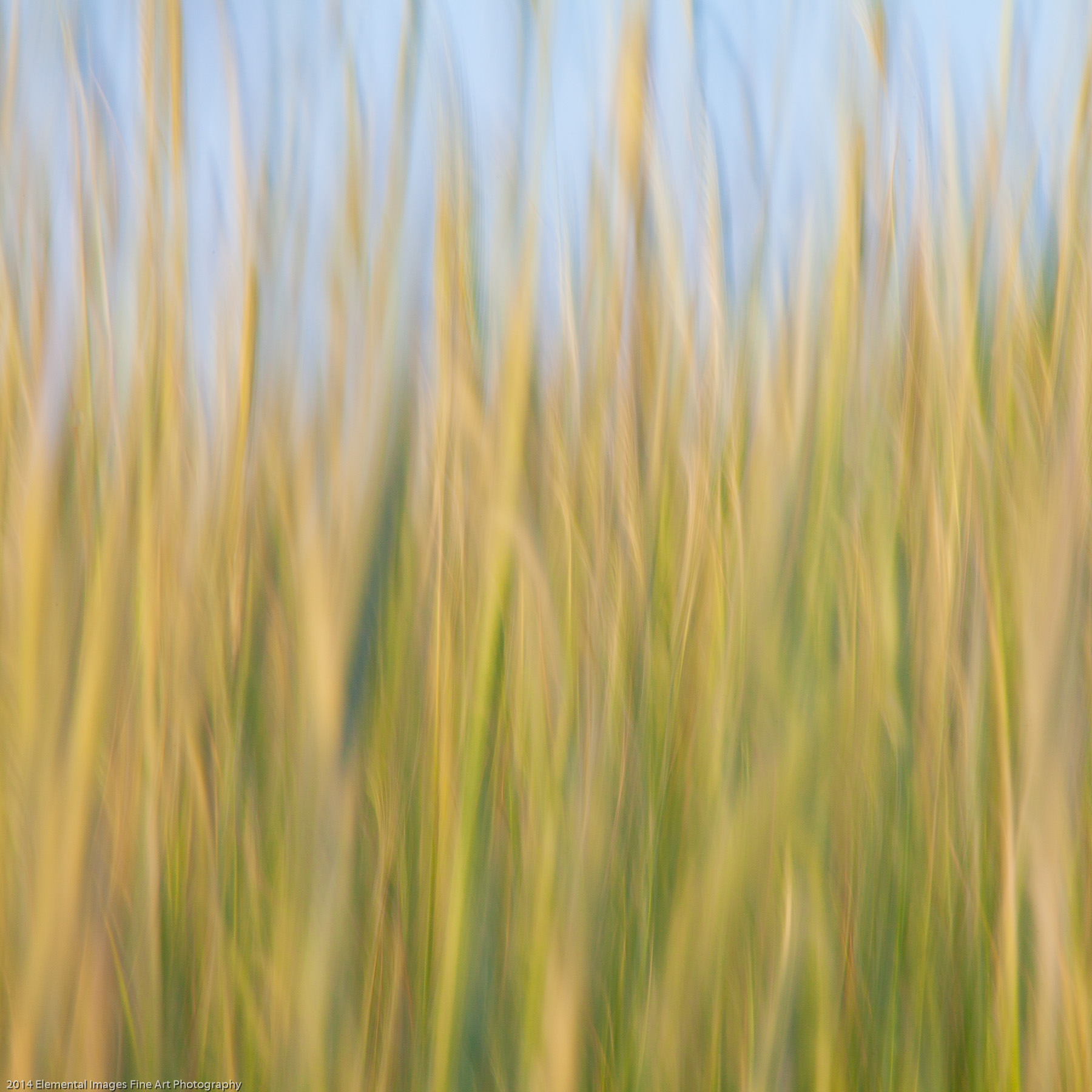 Grasses CI | The Palouse | WA | USA - © 2014 Elemental Images Fine Art Photography - All Rights Reserved Worldwide