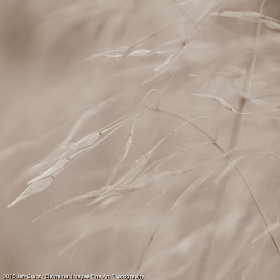 Grasses #143 | Smith Rock State Park | OR | USA - © 2015 Jeff Gracz / Elemental Images Fine Art Photography - All Rights Reserved Worldwide