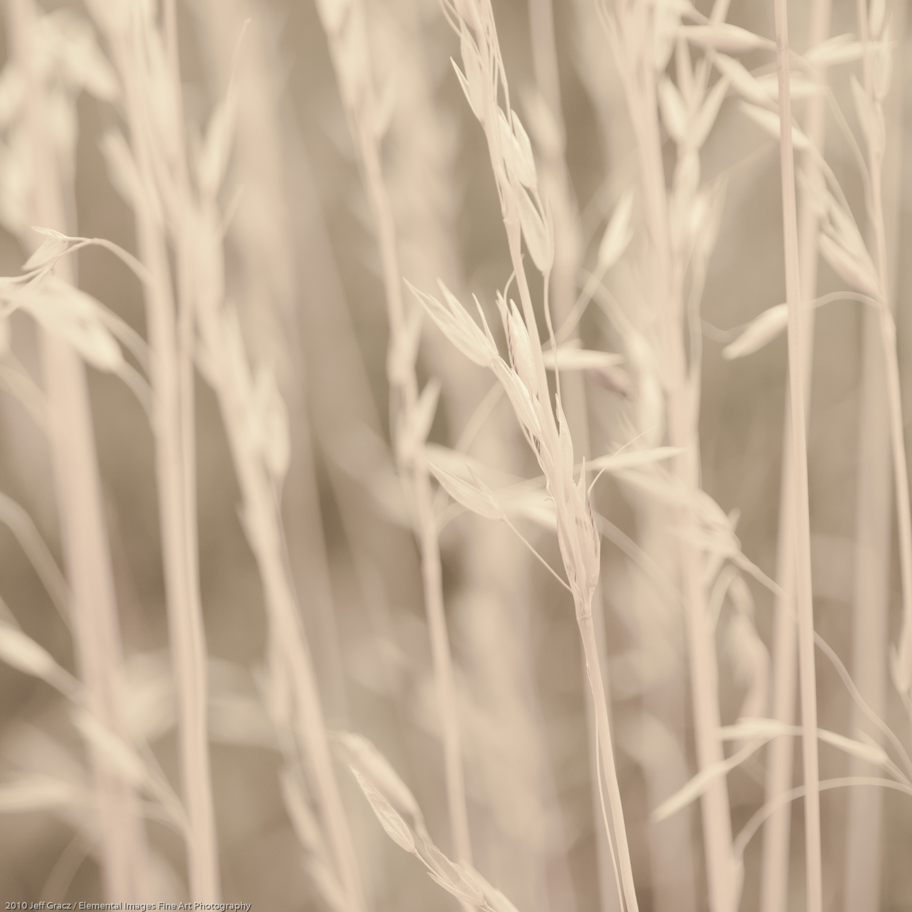 Grasses VI | Portland | OR | USA - © 2010 Jeff Gracz / Elemental Images Fine Art Photography - All Rights Reserved Worldwide