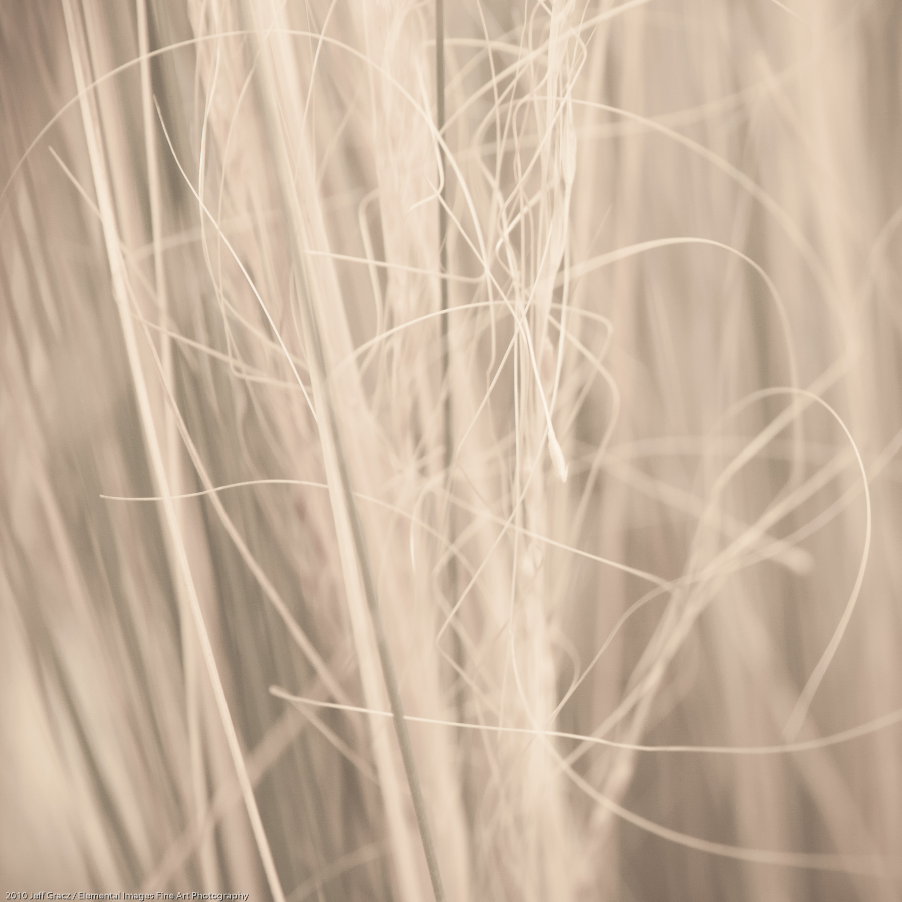 Grasses X | Portland | OR | USA - © 2010 Jeff Gracz / Elemental Images Fine Art Photography - All Rights Reserved Worldwide