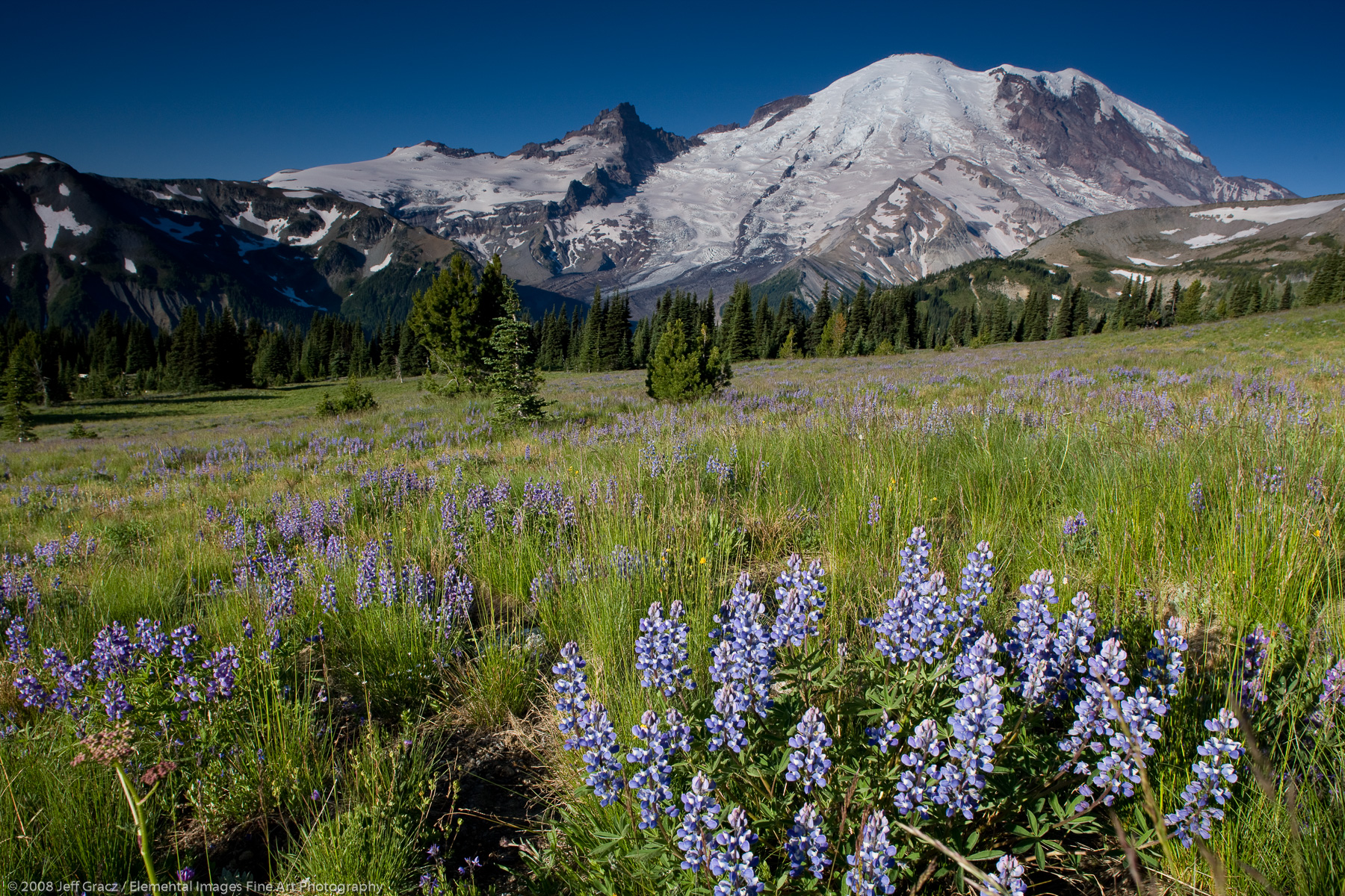 Mt Rainier from sunrise meadows with lupine | Mount Rainier National Park | WA | USA - © © 2008 Jeff Gracz / Elemental Images Fine Art Photography - All Rights Reserved Worldwide