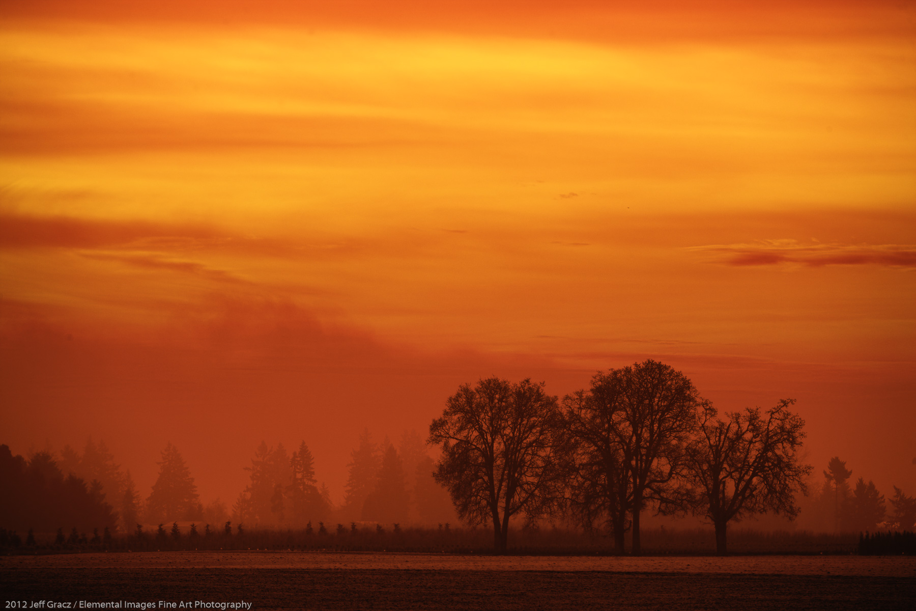 Fog, Sunrise, Willamette Vallye | Butteville | OR | USA - © 2012 Jeff Gracz / Elemental Images Fine Art Photography - All Rights Reserved Worldwide
