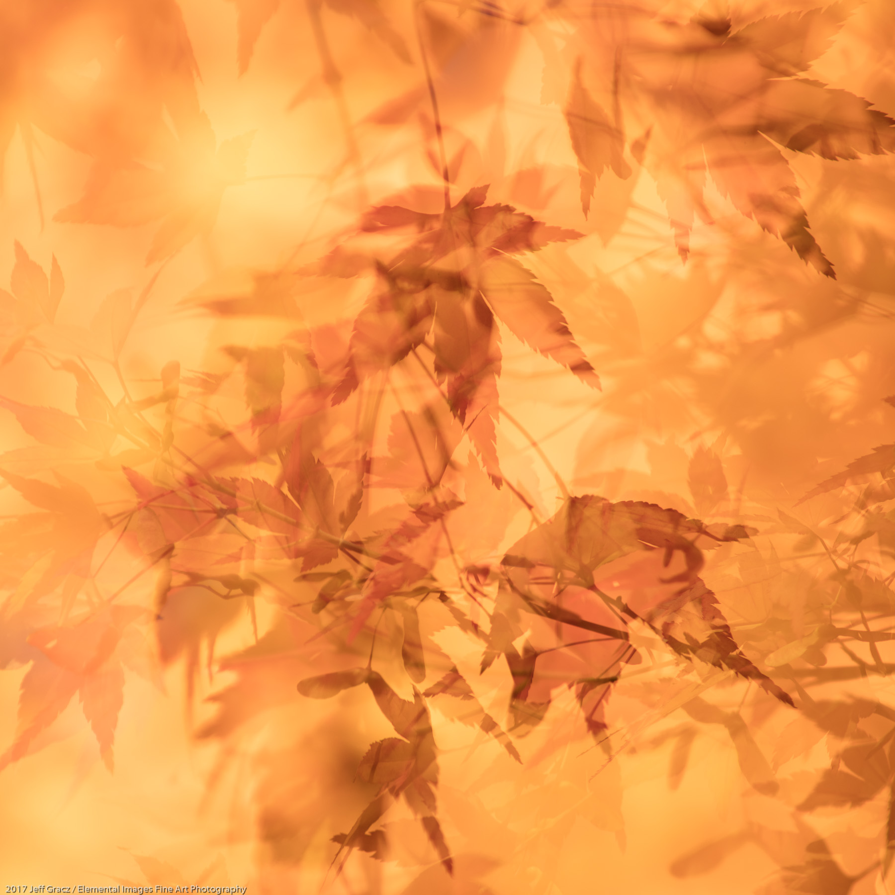 Leaves #155 | Portland | OR | USA - © 2017 Jeff Gracz / Elemental Images Fine Art Photography - All Rights Reserved Worldwide
