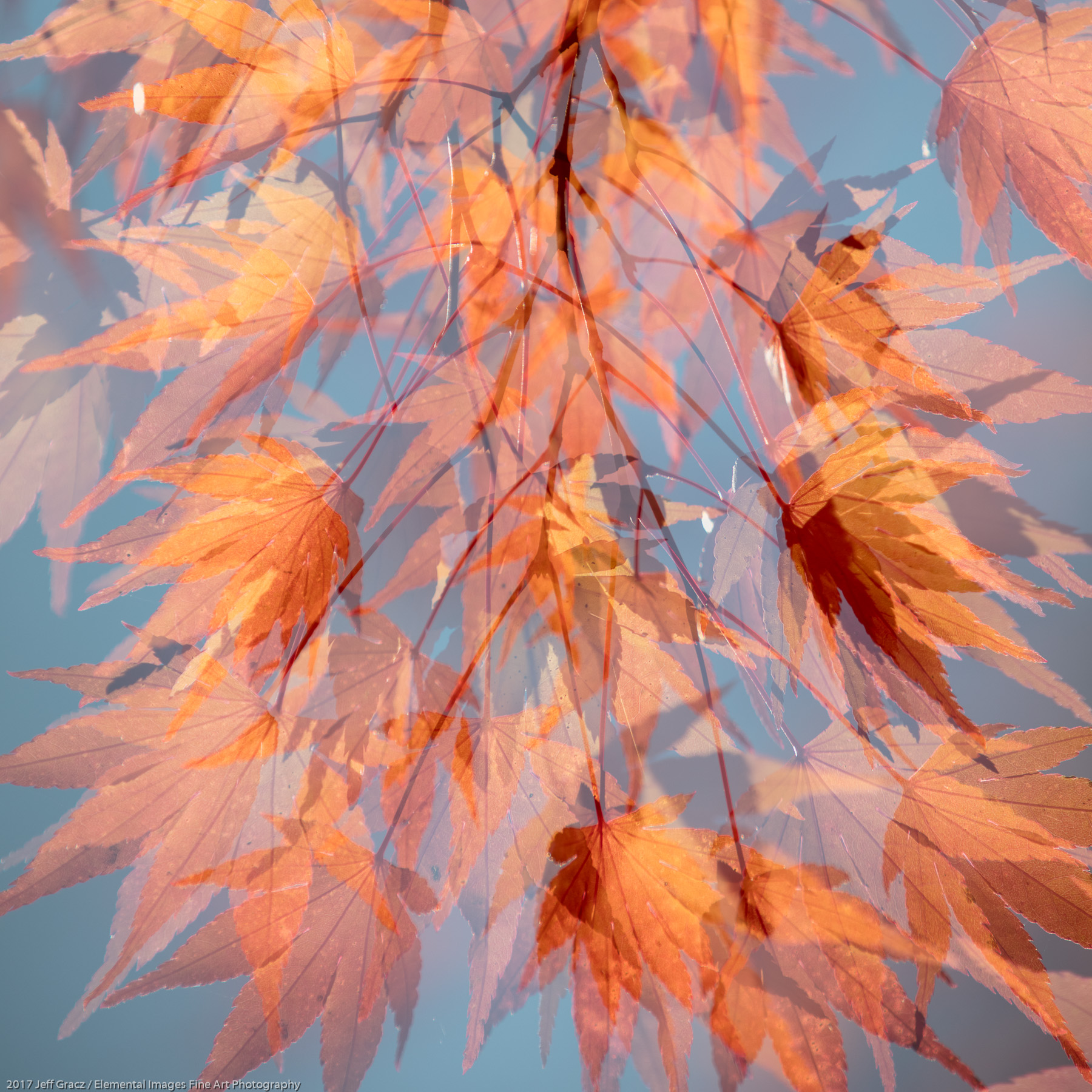 Leaves #156   Portland   OR   USA - © 2017 Jeff Gracz / Elemental Images Fine Art Photography - All Rights Reserved Worldwide
