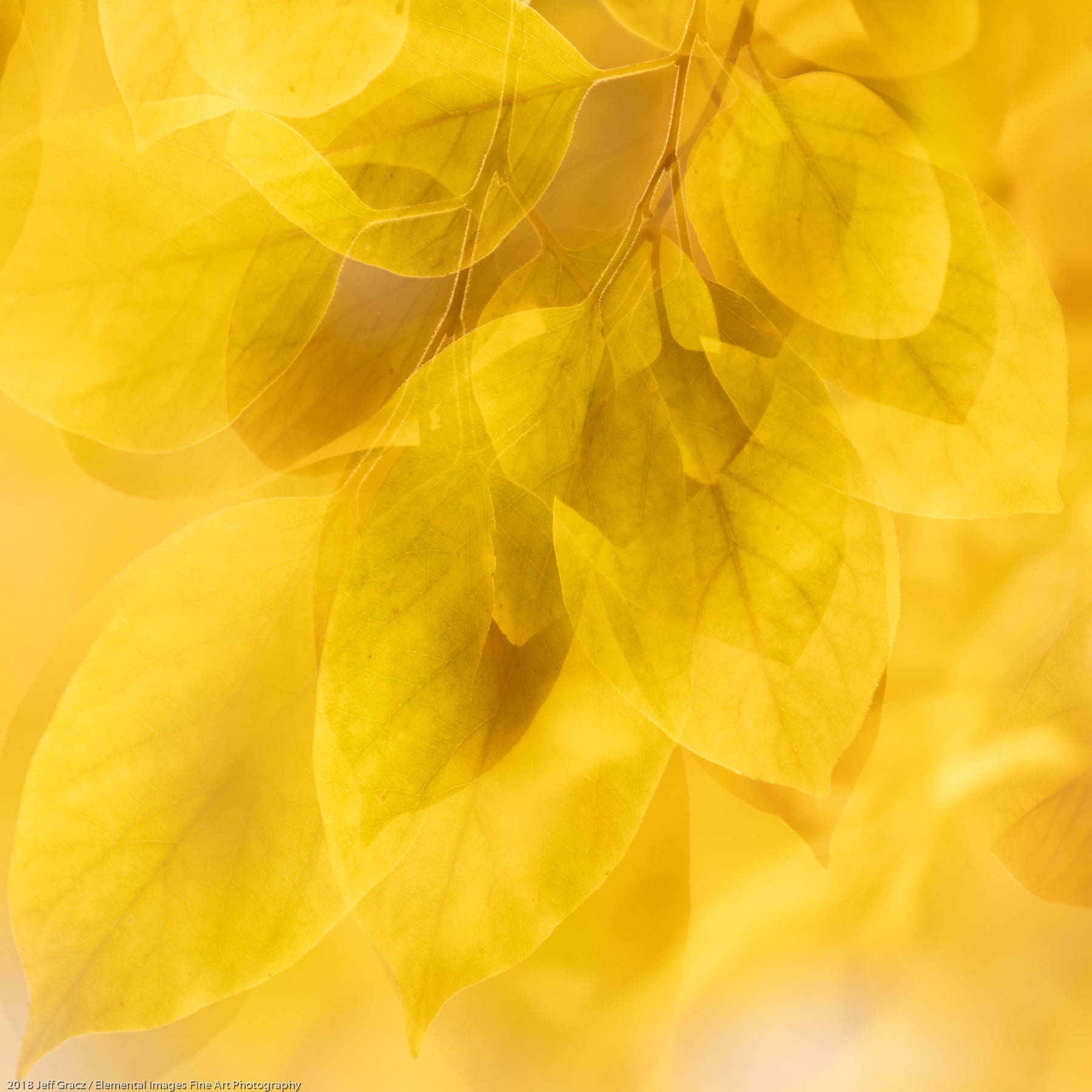 Leaves #180   Portland   OR   USA - © 2018 Jeff Gracz / Elemental Images Fine Art Photography - All Rights Reserved Worldwide