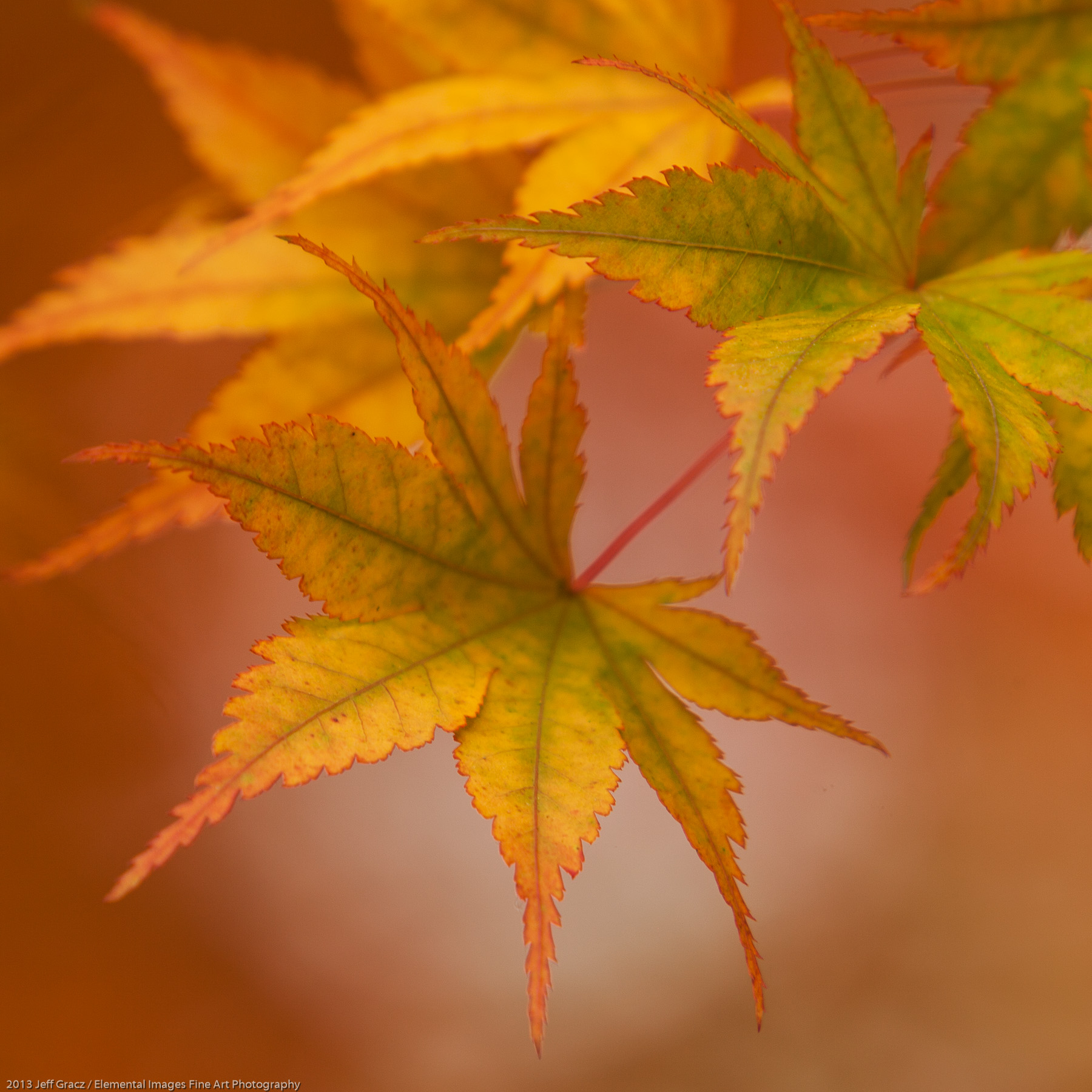Leaves LXIX | Portland | OR | USA - © 2013 Jeff Gracz / Elemental Images Fine Art Photography - All Rights Reserved Worldwide