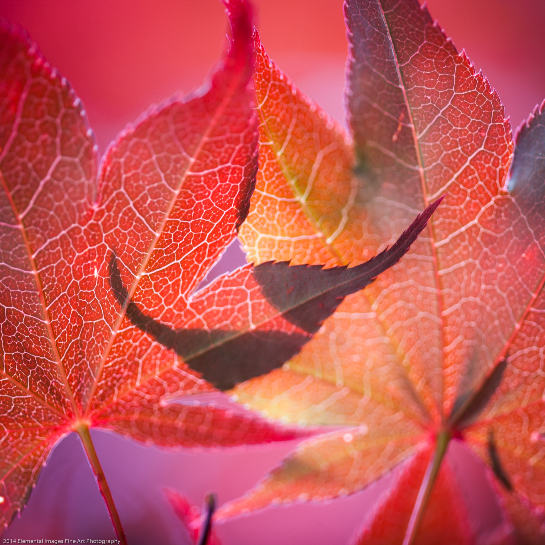 Leaves LXXXVIII | Portland | OR | USA - © 2014 Elemental Images Fine Art Photography - All Rights Reserved Worldwide