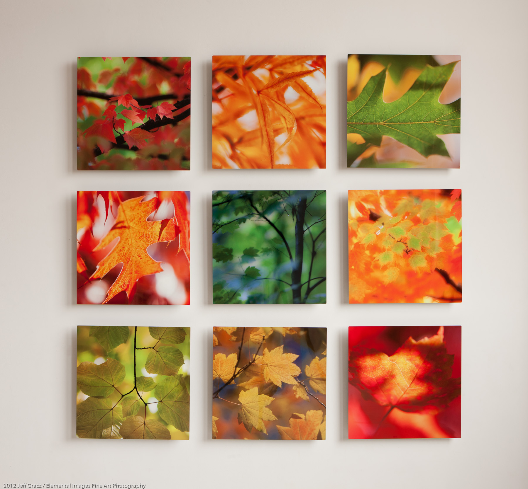 16x16 grouping example | Portland | OR | USA - © 2012 Jeff Gracz / Elemental Images Fine Art Photography - All Rights Reserved Worldwide